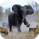 Angry Elephant Jungle Rampage by Gaming Stars Inc