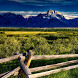 mountain summer live wallpaper by motion interactive