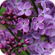 Lilac Flower Wallpapers by Dabster Software