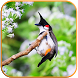Birds Calls Sounds - Relaxing by ADS SOFT