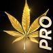 Marijuana Live Wallpaper by Marijuana Wallpapers