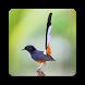 Master Burung Kicau by titin sciba dev
