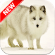 Arctic fox Wallpapers by Fresh Wallpapers