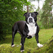 Staffordshire Terrier Themes by altothem