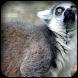 Lemur Wallpapers by HAnna
