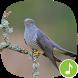 Appp.io - Cuckoo Sounds by Appp.io