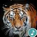 Appp.io - Tiger Sounds