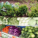 organic vegetables by belbo