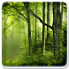 Forest Live Wallpaper by Art LWP