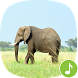 Appp.io - Elephant Sounds by Appp.io