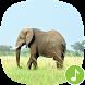 Appp.io - Elephant Sounds