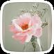 Love Pink Rose Theme by yuqingtheme