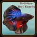 Budidaya Ikan Cupang by E-book App