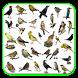 Cantos De Pássaros Silvestres by ayyasy