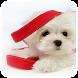 Cute Dog Theme by Theme Dreamer