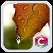 Dew Leaf Drop C Launcher Theme by Best Themes Workshop