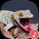 Appp.io - Gecko Sounds