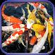 Fancy Koi Fish Live Wallpaper by Green Studio App