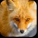 Fox Wallpapers by LunaDev