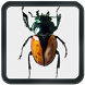 Real Bug Crusher by Friz PRO