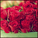 Red Rose Wallpapers by bmks services