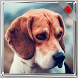 Beagle Dog Wallpaper by WallpapersInc