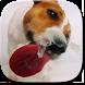 Dog Licks Screen Video LWP by Pawel Gazdik