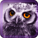 Owl Collection live wallpaper by Free Live Wallpaper Lab