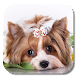 Cute Puppy Live Wallpaper by KKPICTURE