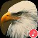 Appp.io - Eagle Sounds by Appp.io