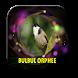 Sonnerie oiseau bulbul orphee