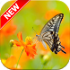 Butterfly Wallpapers by Hybrid Dictionary