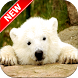 Baby Polar Bear Wallpapers by Fresh Wallpapers