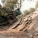 Country India Varsana HD Theme by polsup